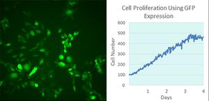 蛍光顕微鏡によるタイムラプスを含む細胞関連の実験のデータ解析