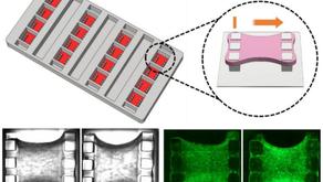 セルスケール社 マトリックス形成を調節するための線維芽細胞メカノシグナル伝達