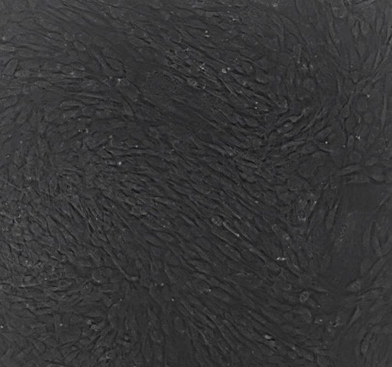 cell-imaging-02-Time Lapse Video of MSC