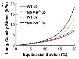 梗塞後のマウスにおけるMMP9の欠失は、フィブロネクチンの貯蓄とリシルオキシダーゼの活性化により、梗塞の硬化を増加させ、コラーゲンの減少とコラーゲンのクロスリンキングの促進により拡張を妨げる