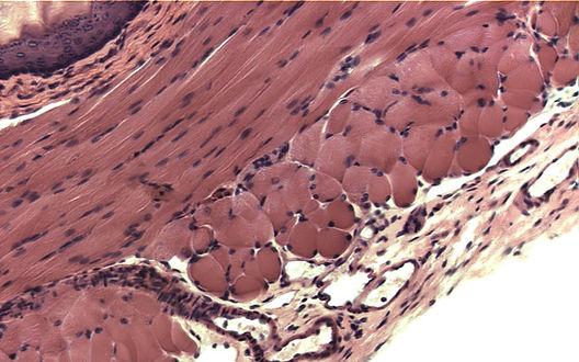 ls620小型細胞顕微鏡の観察例