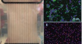 最も簡単な Lab-on-a-Chip 顕微鏡
