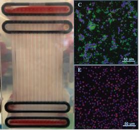 キメラ抗原受容体(CAR)T細胞の精製 と血小板除去用のマイクロ流体デバイス Campos-Gonzalez他, 2018