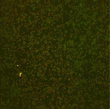 GreenRedComposite.jpg