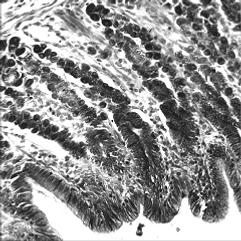 明視野顕微鏡による観察画像