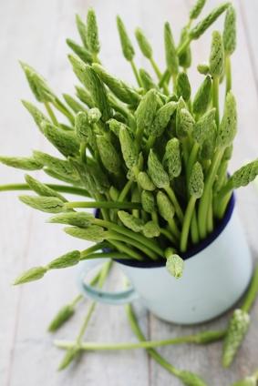 wild asparagus (12)