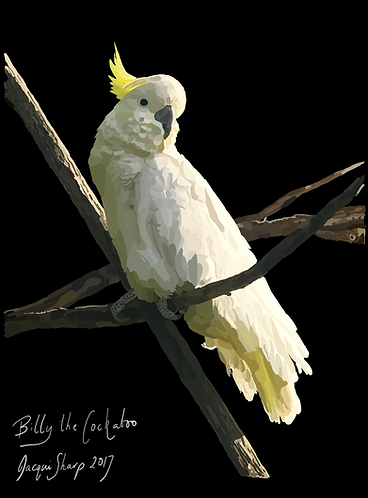 Billy the Cockatoo on Photo Block