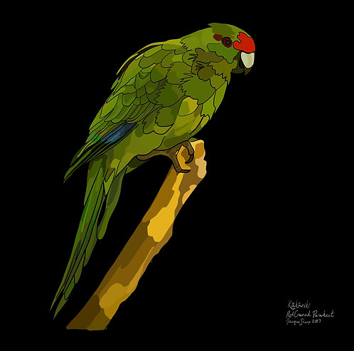 Kakariki (Red Crowned Parakeet) on Photo Block