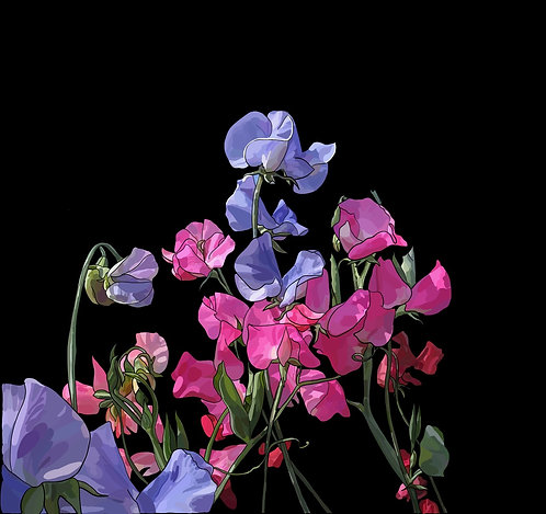 Sweetpeas on Canvas