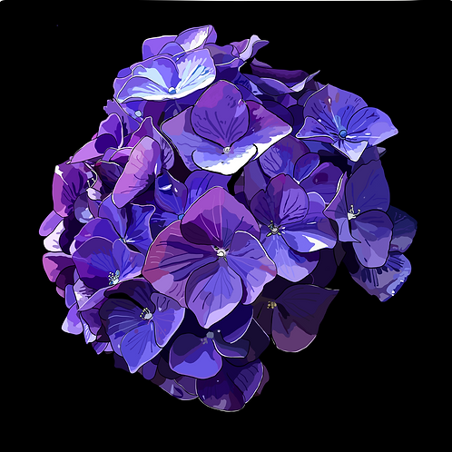 Purple Hydrangea on black photo block