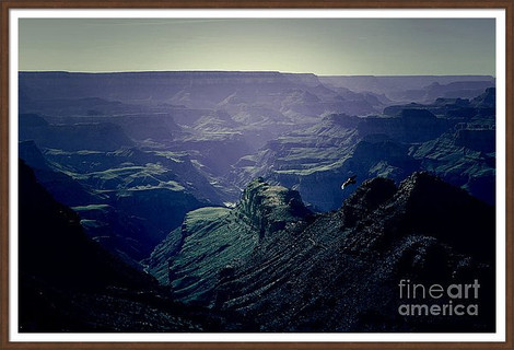 Grand Canyon Bird of Prey