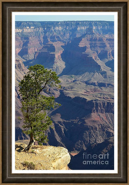 Lone Tree on Edge of Grand Canyon