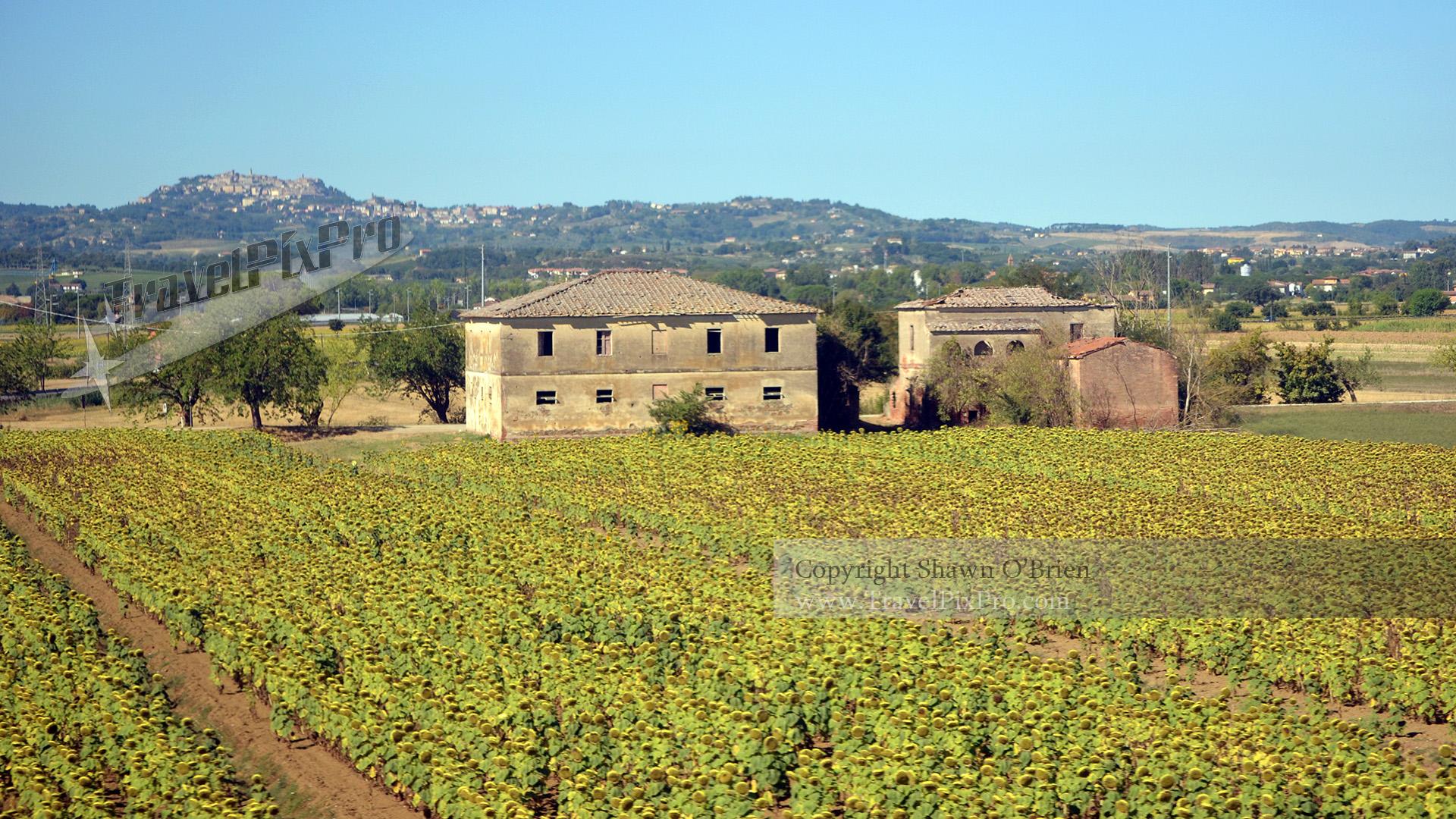 Italian Flower Farm