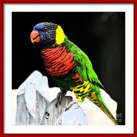 Bright Parakeet Colors