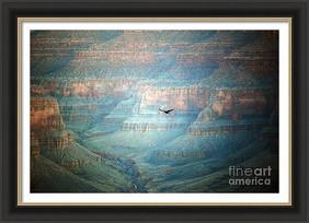 Thunderbird In Flight Inside Grand Canyon