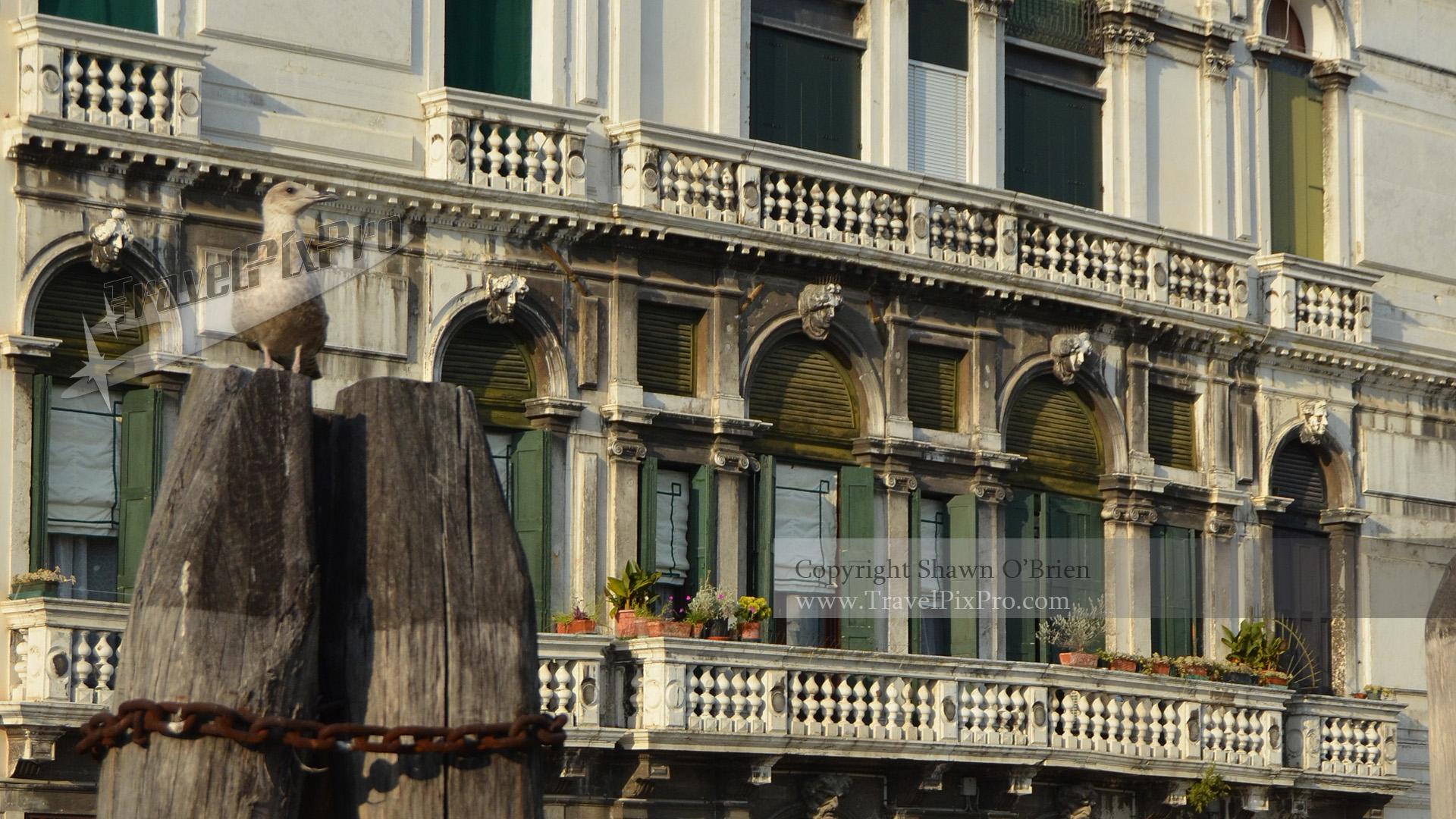 Venice Seabird