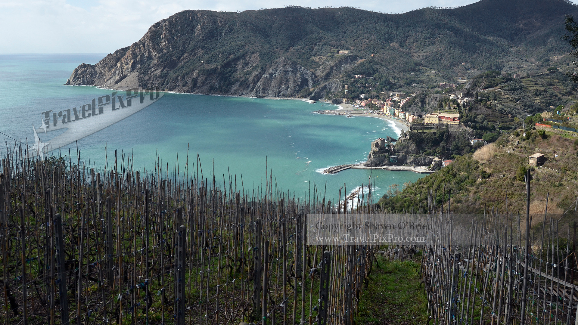 Vineyard Over Monterosso 5Terre