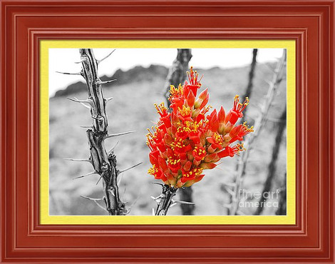 Jacob's Ladder (Red Ocotillo) in Big Bend NP