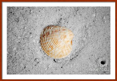 Orange Sea Shell Macro