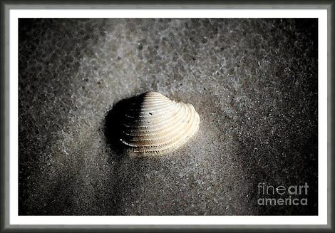 Seashell in Wet Sand Macro