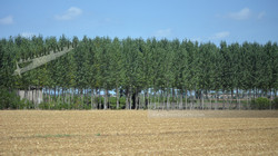 Italian Countryside Orchard