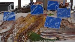 Exotic Fish Market Nice, France
