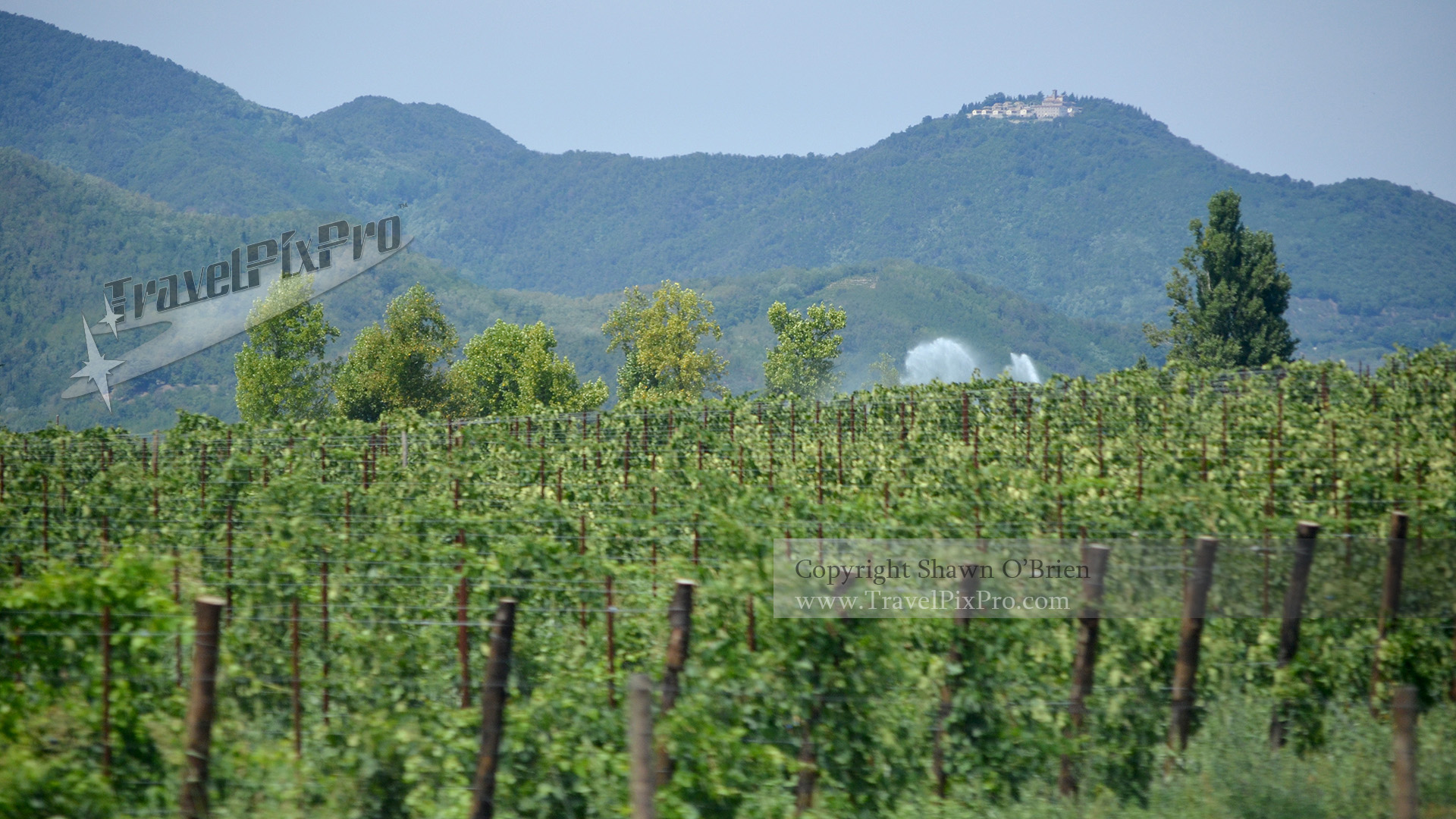 Italian Vineyard View