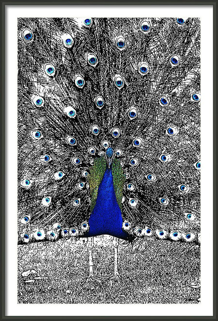 Blue-eyed Peacock