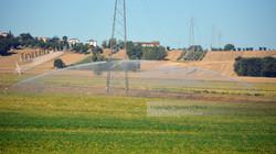 Italian Farmland