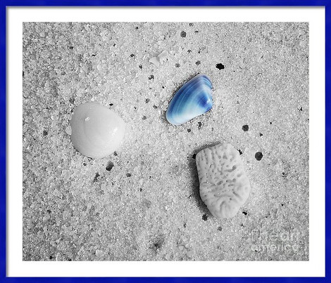 Blue Sea Shell Study