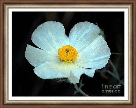 White Wildflower Macro