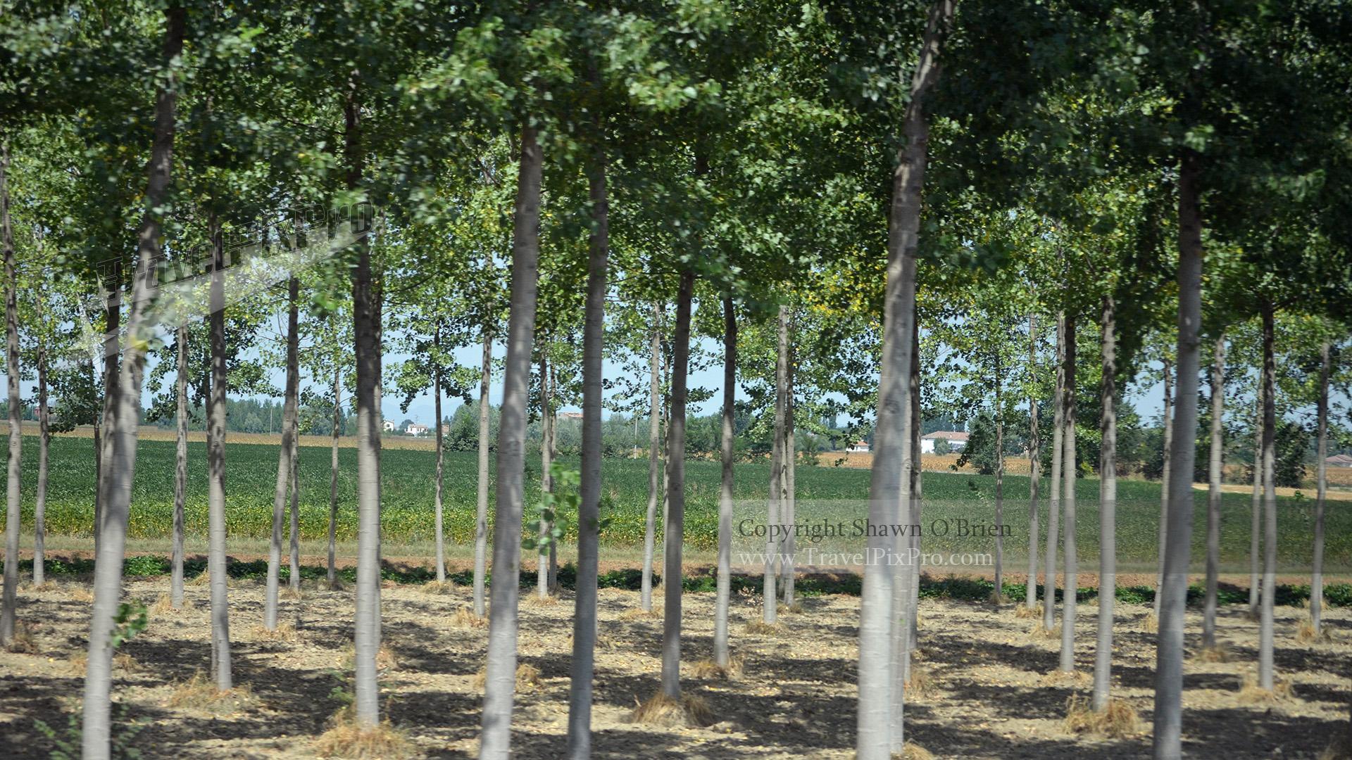Italian Orchard Landscape