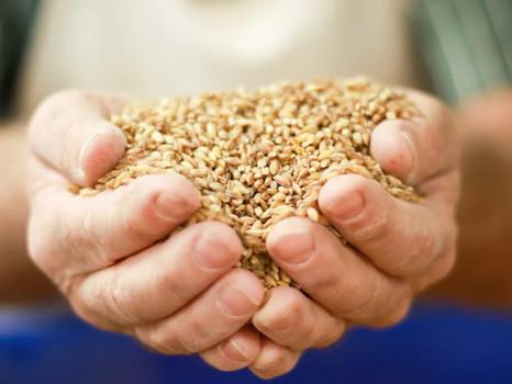 Solution Maker:  Alaska Flour solves for food security, soil and people health.