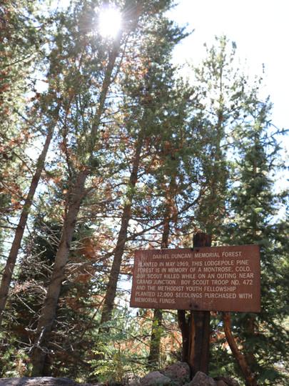 Daniel Duncan Memorial Forest