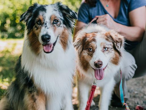 Windsor Veterinary & Dental Service