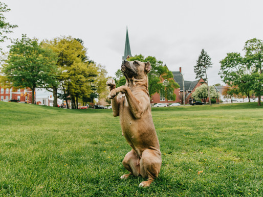 K9 Role Models - Dog Training