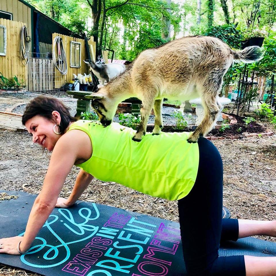 Goat Yoga - SEP 26 (4PM)