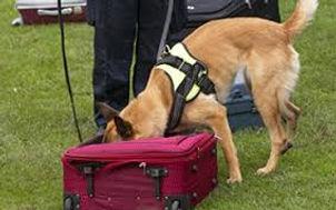 Belgian scent dog.jpg