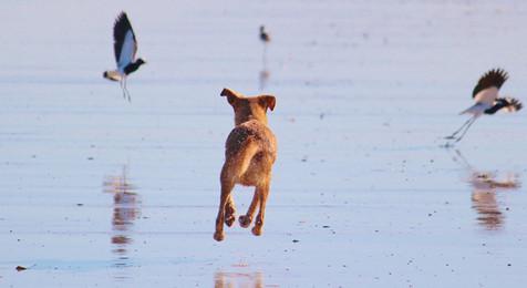 Hundeschule Kunterbunter Hund Verhaltenberatung Problemhund