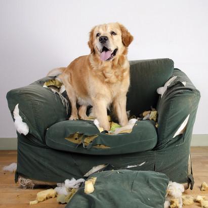 Celia Galley Verhaltensberatung Problemhund