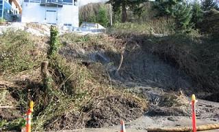 Do Trees Really Prevent Mudslides?