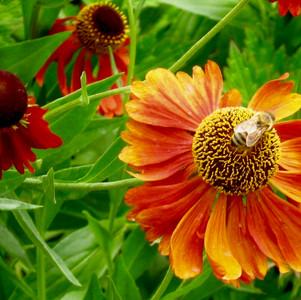 Create a Bee Friendly Garden