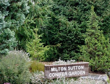 Milton Sutton Conifer Garden