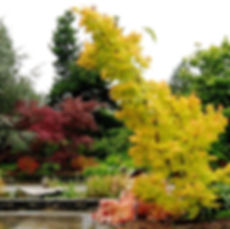 Fall in the Arboretum at South Seattle College