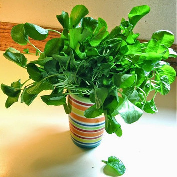 Preventing Scurvy with Watercress