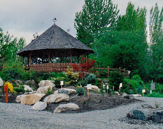 The Gazebo in the early 1990s with early plantings in Milton Sutton Conifer Garden