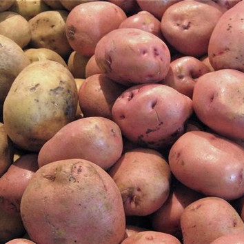 Potatoes: A Story of Feast, Famine - and Poison