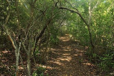 wood path.jpg