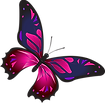 butterfly-2778491__340.png