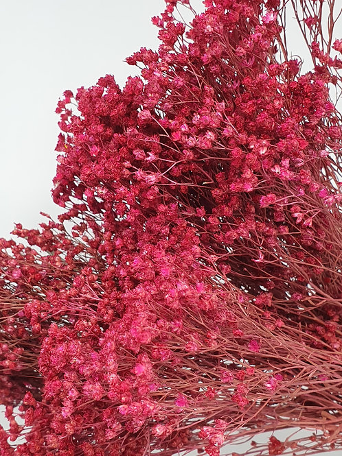 Dark Pink Broom Bloom